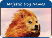 Majestic Dog Names