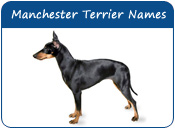 Manchester Terrier Dog Names