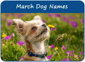 March Dog Names