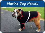 Marine Dog Names