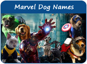 Marvel Dog Names