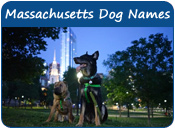 Massachusetts Dog Names