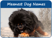 Meanest Dog Names