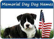 Memorial Day Dog Names