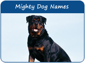 Mighty Dog Names