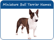 Miniature Bull Terrier Dog Names