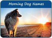 Morning Dog Names