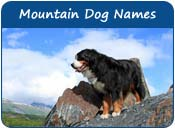Mountain Dog Names