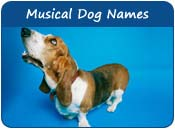 Musical Dog Names