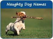 Naughty Dog Names
