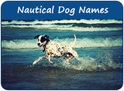 Nautical Dog Names