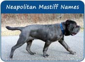 Neapolitan Mastiff Dog Names