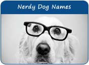 Nerdy Dog Names