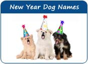 New Year Dog Names