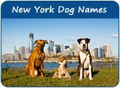 New York Dog Names