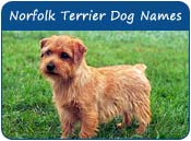 Norfolk Terrier Dog Names