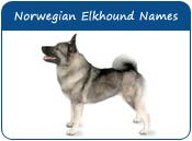 Norwegian Elkhound Dog Names