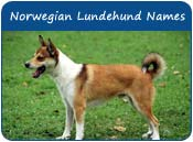 Norwegian Lundehund Dog Names