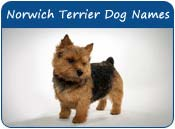 Norwich Terrier Dog Names