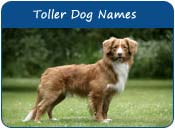 Nova Scotia Duck Tolling Retriever Dog Names