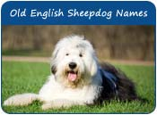 Old English Sheepdog Dog Names