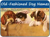 Old fashioned dog names 78