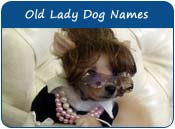 Old Lady Dog Names