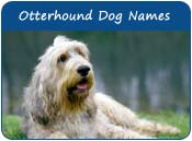 Otterhound Dog Names