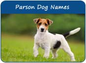 Parson Russell Terrier Dog Names