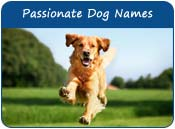 Passionate Dog Names