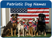 Patriotic Dog Names