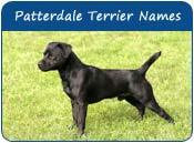 Patterdale Terrier Dog Names