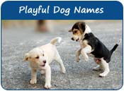 Playful Dog Names