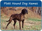 Plott Hound Dog Names