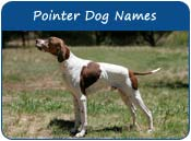 Pointer Dog Names