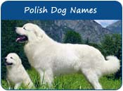 Polish Dog Names
