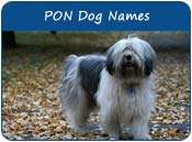 Polish Lowland Sheepdog Dog Names