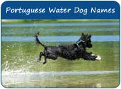 Portuguese Water Dog Names