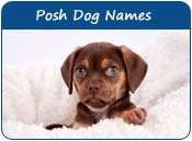 Posh Dog Names