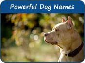Powerful Dog Names
