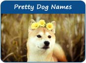 Pretty Dog Names