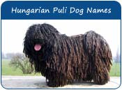 Puli Dog Names
