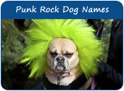 Punk Rock Dog Names