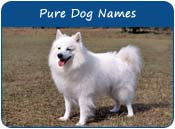 Pure Dog Names
