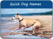 Quick Dog Names