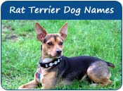 Rat Terrier Dog Names