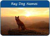 Ray Dog Names