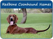 Redbone Coonhound Dog Names