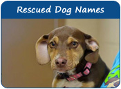 Rescued Dog Names