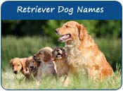 Retriever Dog Names